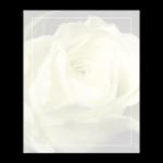 Rouwkaart-Diversen-Model-geleroos kaal